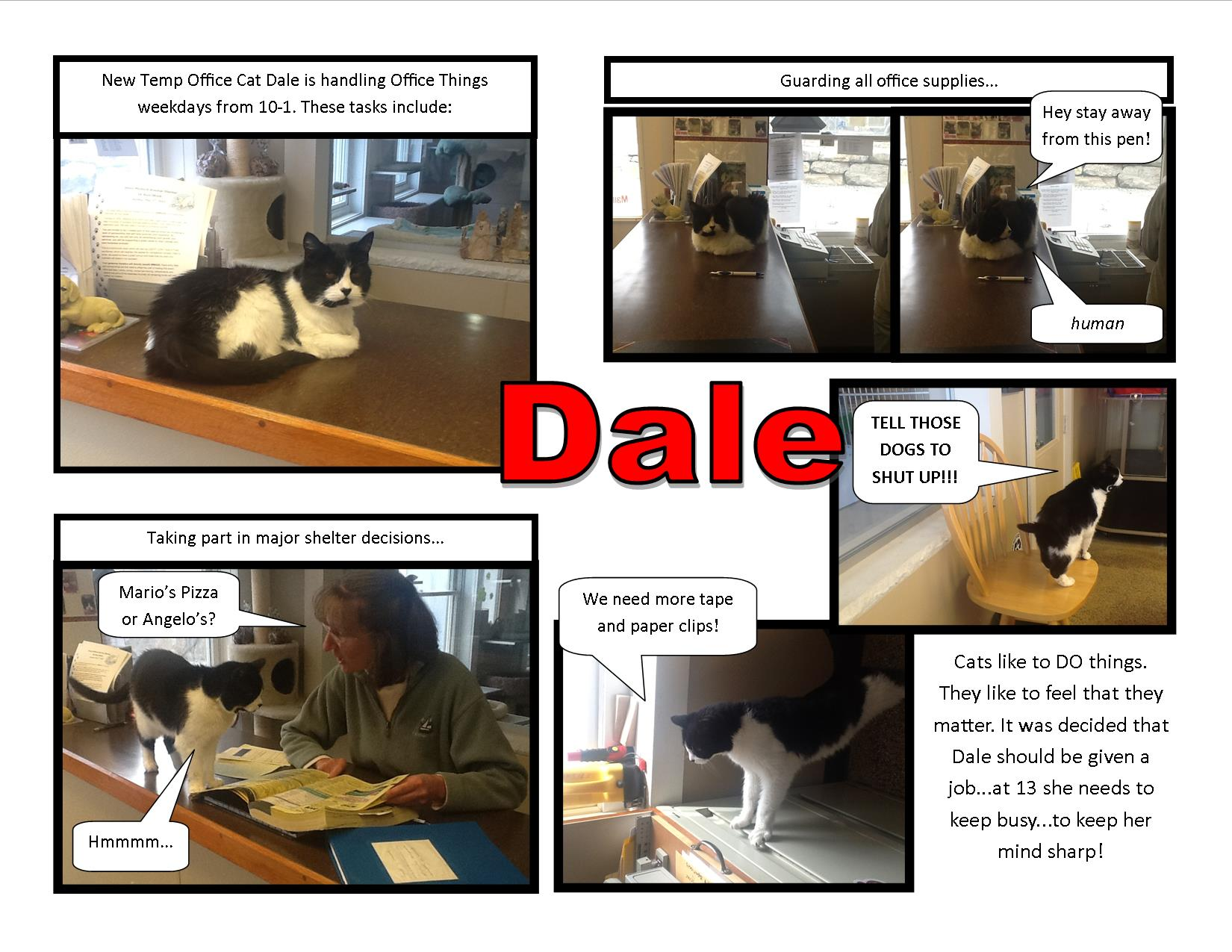 Temp Office Cat Dale